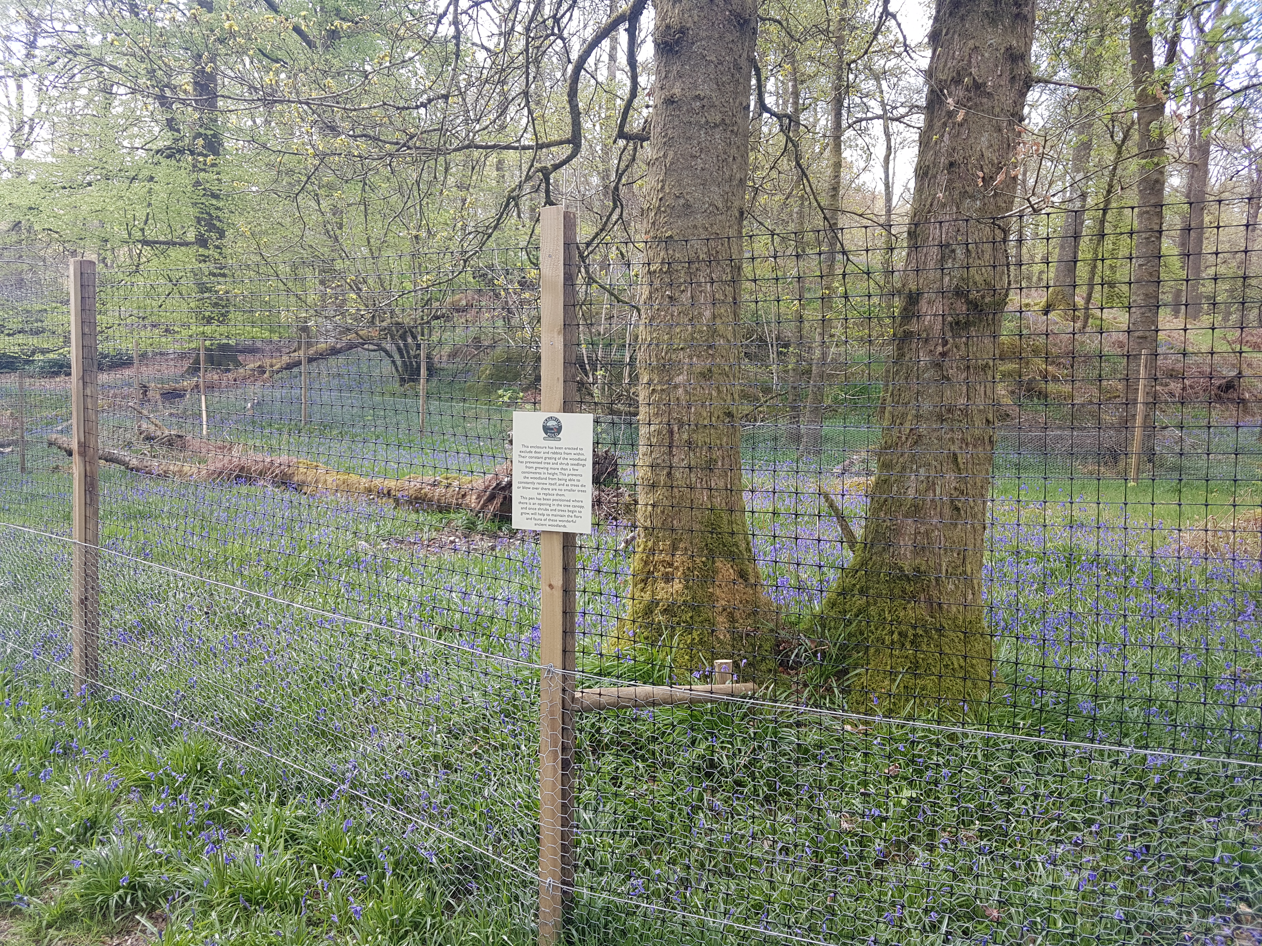Woodland enclosure at Skelwith Fold Caravan Park