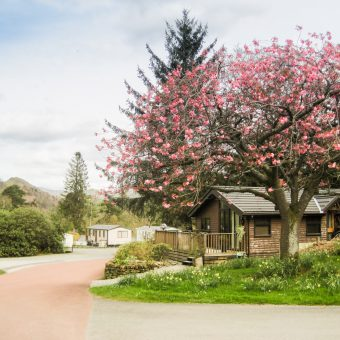 A Cherry Blossom overlooking the Warden's Chaletat at Skelwith Fold Caravan Park