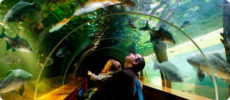 10% off tickets at the Lakes Aquarium