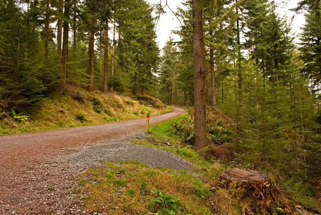 Enjoy a bike ride to Grizedale from Skelwith Fold Caravan Park
