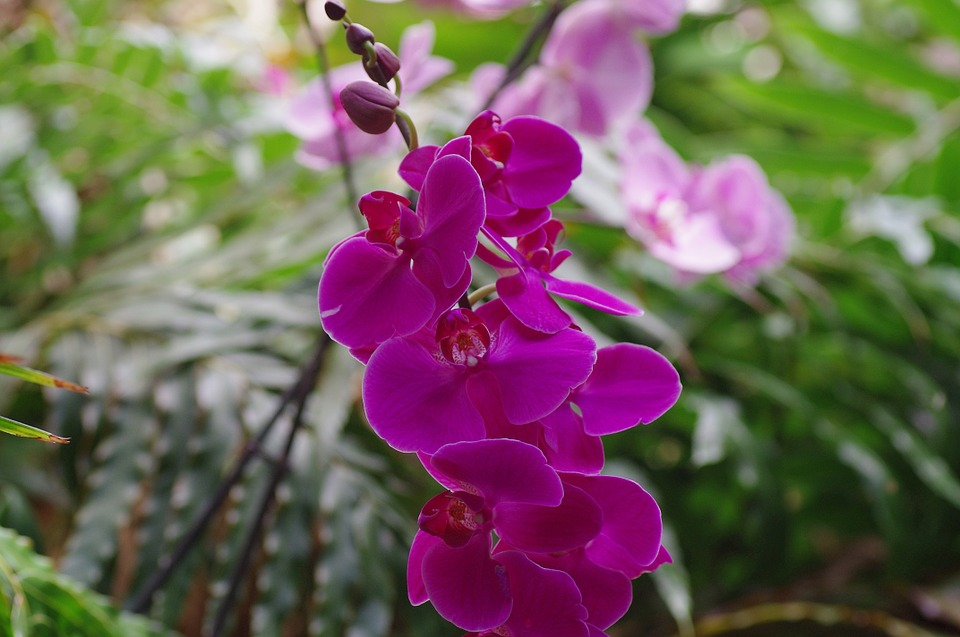Nature Spotting whilst staying at Skelwith Fold Caravan Park: Orchids