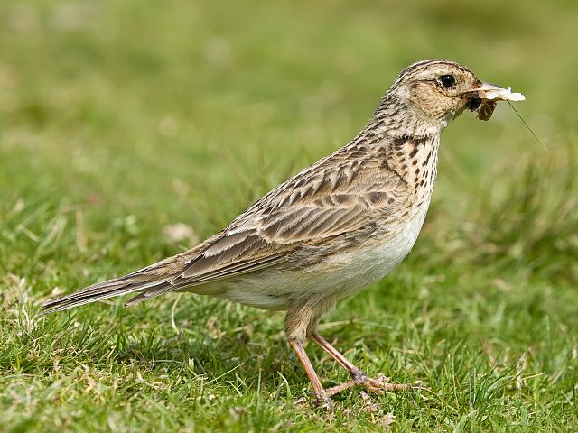 Enjoy birdspotting whilst staying at Skelwith Fold Caravan Park