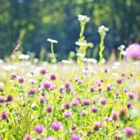 Beautiful Wildflowers | Skelwith Fold Caravan Park