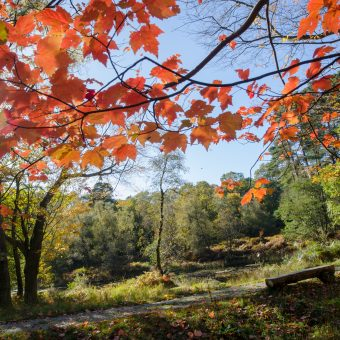 Autumn leaves at Skelwith Fold